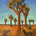 Afternoon Light At Joshua Tree by Diane McClary