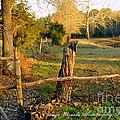 Afternoon Orange Gold Glow On Old Broken Fence by Pamela Smale Williams
