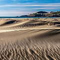 Agate Beach Dunes And Yaquina Head Light by Greg Stene