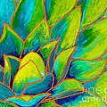 Agave Glow by Marta Tollerup