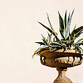 Agave In Pot by Grigorios Moraitis