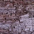 Aged Wood by Dawn Hagar