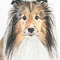 Agility Dog Sheltie In Pastel by Kate Sumners
