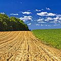 Agricultural Landscape - Young Corn Field by Brch Photography