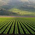 Agricultural Rows by Marc Levine