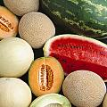 Agriculture - Mixed Melons, Watermelon by Ed Young