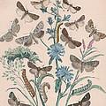 Agrotidae - Hadenidae by W Kirby