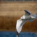 Airborne Seagull Series 1 by Roy Williams