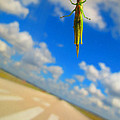 Airplane Hitchhiker by Penny Parrish
