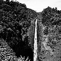 Akaka Falls - Bw by Greg Vaughn - Printscapes