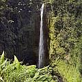 Akaka Falls  by Peter J Sucy
