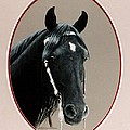 Al Zirr Portrait by DiDi Higginbotham