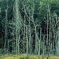 Alabama Autumn Marsh by Maria Urso