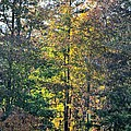 Alabama Forest In Autumn 2012 by Maria Urso