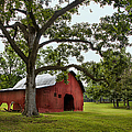 Alabama Red Barn  by T Lowry Wilson