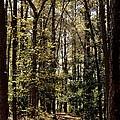 Alabama Woodlands In Spring 2013 by Maria Urso