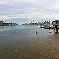Alamitos Bay by Heidi Smith
