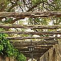 Alamo Walkway by Carol Groenen