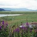 Alaska - Juneau Wetlands by Pamela Critchlow