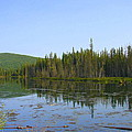 Alaska River Swamp by Lew Davis