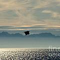 Alaskan Eagle At Sunset by David Arment