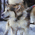 Alaskan Malamute Photo Art 09 by Thomas Woolworth