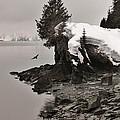Alaskan Winter Coast by David Broome