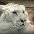 Albino by Darrell Clakley