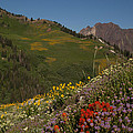 Albion Basin Summer by Susan Rovira