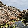 Algae Pool by Jim Cook