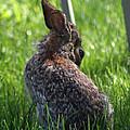 Alien Bunny by Dan McCafferty