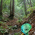 Alien In Redwood Forest by Ben Upham III
