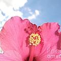Blissful 33 by Michele Penn