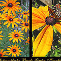 All About Black-eyed Susans by Brooks Garten Hauschild