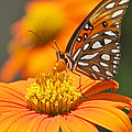 All About Orange 3236 3 by Olivia Novak