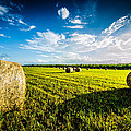 All American Hay Bales by David Morefield