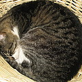 All Curled Up by Marita McVeigh