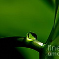 All In Green by Michelle Meenawong