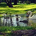 All In The Family by Cyryn Fyrcyd