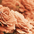 All The Orange Roses by Jennie Marie Schell