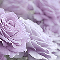 All The Soft Violet Roses by Jennie Marie Schell