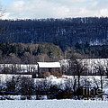 Allegany Winter by Christian Mattison
