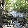 Allen Creek by William Norton
