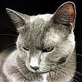 Alley Cat. by Eduardo De Moya
