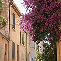 Alley With Bougainvillea - Provence by Christiane Schulze Art And Photography