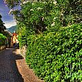 Alley With Green Plants by Mats Silvan