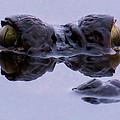 Alligator Eyes On The Foggy Lake by Zina Stromberg