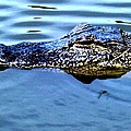 Alligator With Spider by Robin Lewis