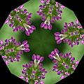 Allium 2 by Patsy Zedar