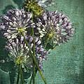 Allium Wildflower With Grunge Textures by Kathy Clark